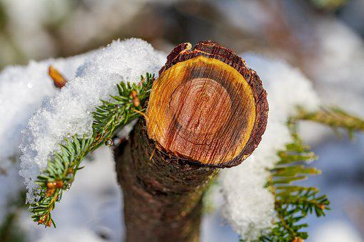 Tree, Winter, Snow, Log, Wet, Nature, Cold, Branch