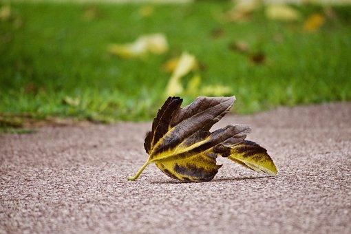 Leaf, Winter, Autumn, Cold, Road, Solitude, Dry
