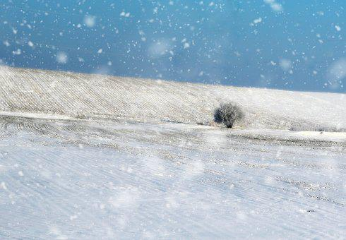 Tree, Field, Snow, Landscape, Winter, Snowflakes, White