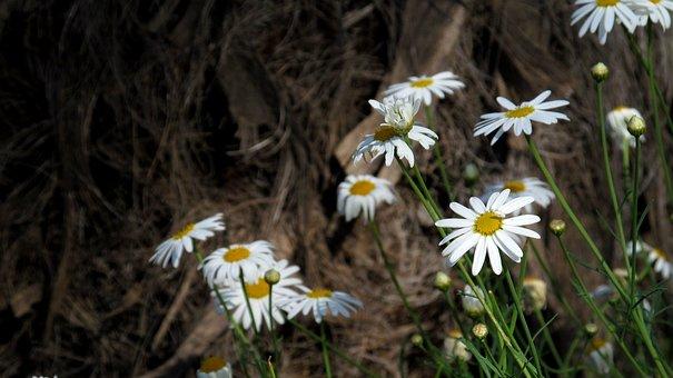 Flower, Garden, Gaza