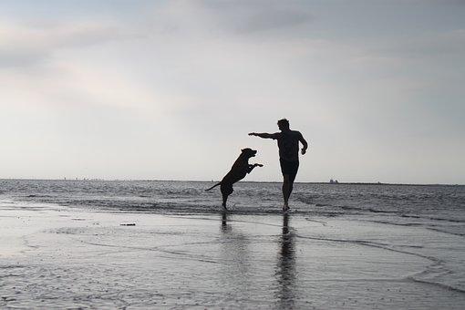 Man, Beach, Water, Dog, Fun, Luck, Freedom, Sand