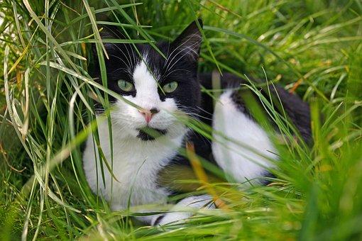 Cat, Grass, Animal, Pet, Fur, Cute, Feline, Meadow