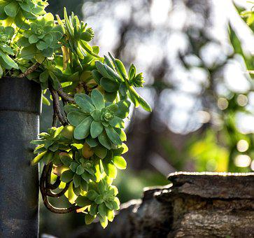 Garden, Gardening, Greenery, Foliage, Nature