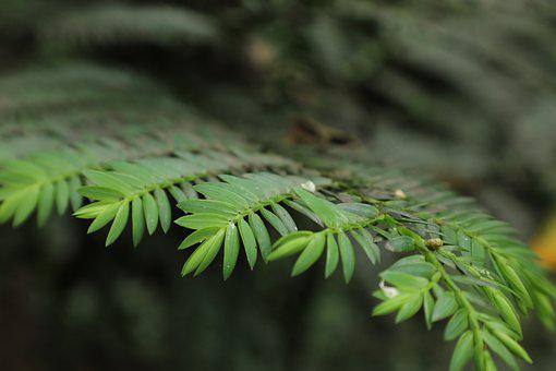 Pine, Forest, Nature, Texture, Green