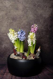 Christmas, Julgrupp, Hyacinths, Gnomes, Moss, Pot