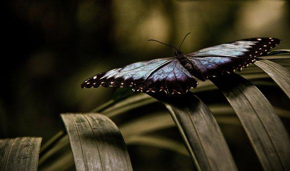 Butterfly, Blue, Leaf, Insect, Nature, Wing