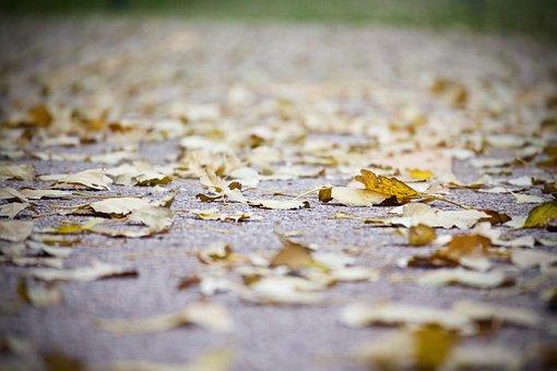 Leaves, Carpet Of Leaves, Winter, Autumn, Road, Season