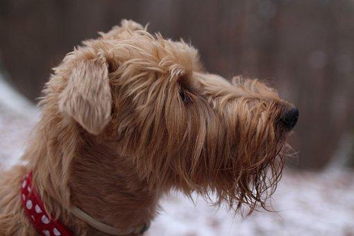 Dog, Winter, Pet, Snow, Love, Happiness, Animal, Puppy