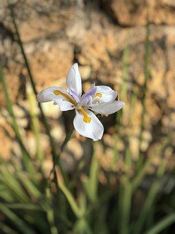 Flower, Naturale, Nature, Flora, Garden, Petals, Beauty