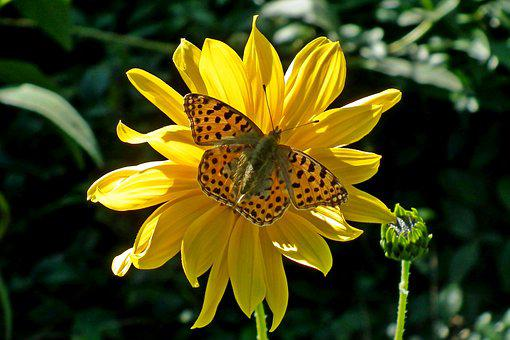 Butterfly, Insect, Flower, The Sun, Nature, Macro