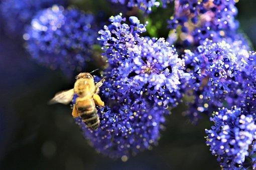 Wasp, Flower, Nature, Garden, Bright