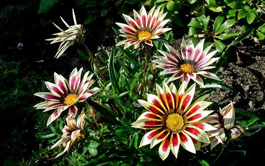 Flowers, Colorful, Flourishing, Nature, Summer