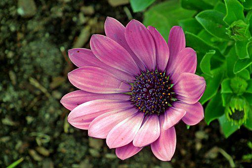 Flower, Blooming, Summer, Nature, The Petals, Beautiful