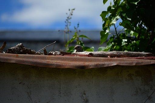 Paloma, Garden, Ceiling, Barn, Nest, Animals, Birds