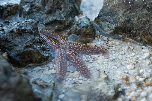 Sea Star, Sea, Ocean