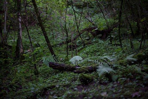Wildlife, Wild Nature, Wild, Nature, Forest, Jungel