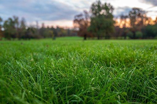 Prato, Dew, Nature, Grass, Green, Plant, Bokeh, Close