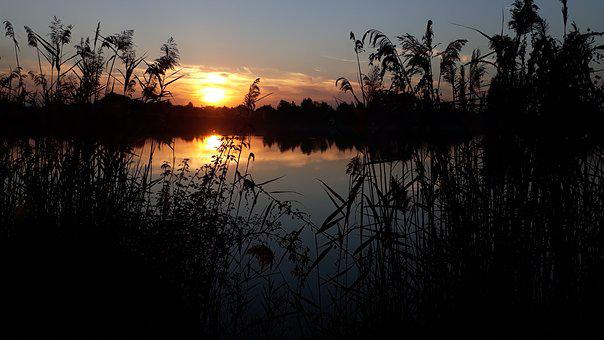 Lake, Peace, Nature, Sunset, Relax, Reed, Calm