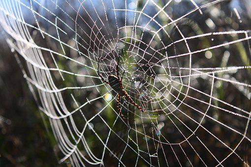 Spider, Spider Web, Network, Dew, Dew Drops