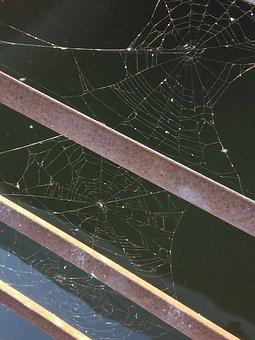 Spider, Web, Nature, Cobweb, Creepy, Dew, Water, Drops