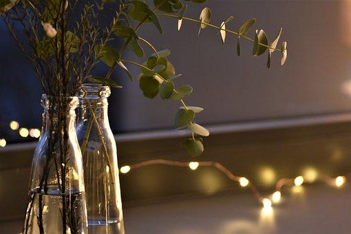 Lichterkette, Mood, Festive, Eucalyptus, Christmas Time