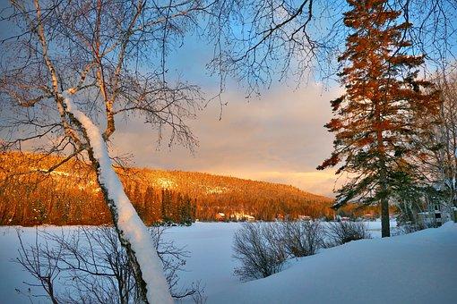 Landscape, Winter, Nature, Snow, Cold, White, Sky, Fir