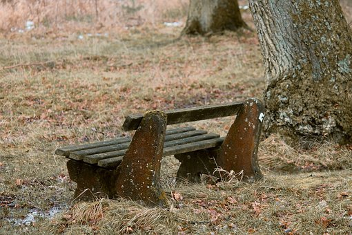 Tranquility Base, Wooden Bench, Bank, Autumn, Glade