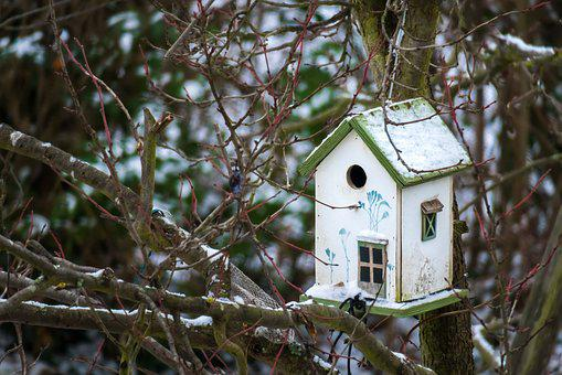 Bird Feeder, House, Feed, Nest, Live, Home, Security