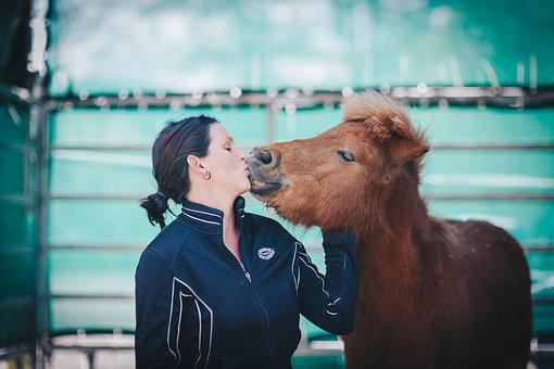 Shetty, Woman, Kiss, Pony, Love For Animals, Female