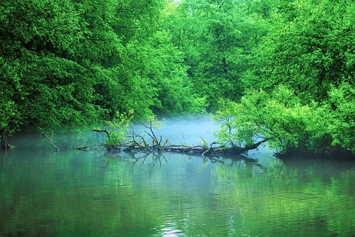 Pond, Trees, Landscape, Forest, Nature, Park, Idyllic