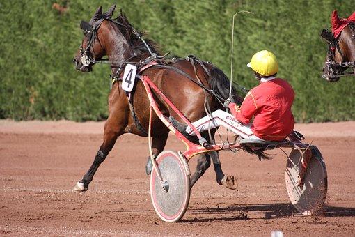 Horse, Jockey, Race