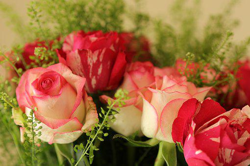 Roses, Pink, Red, Bouquet, Romantic, Blossom, Romance