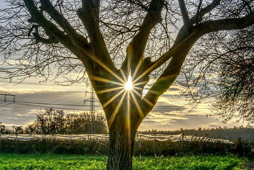 Tree, Backlighting, Sun, Sunbeam, Dazzling Star, Sky