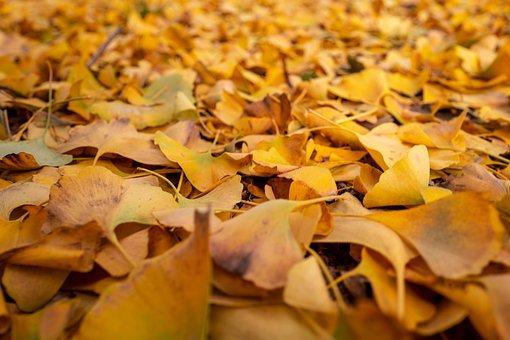 Leaves, Autumn, Yellow, Colors, Seasons, Winter, Carpet