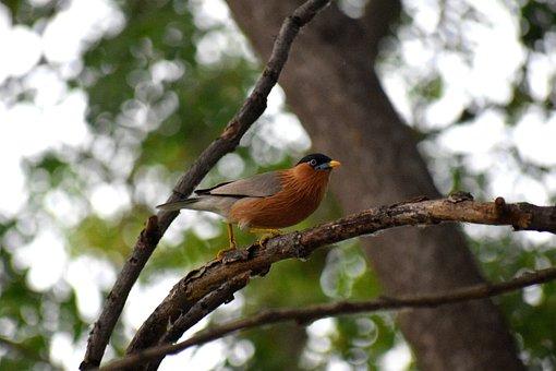 Bird, Nature, Animal, Plumage, Feather, Branch
