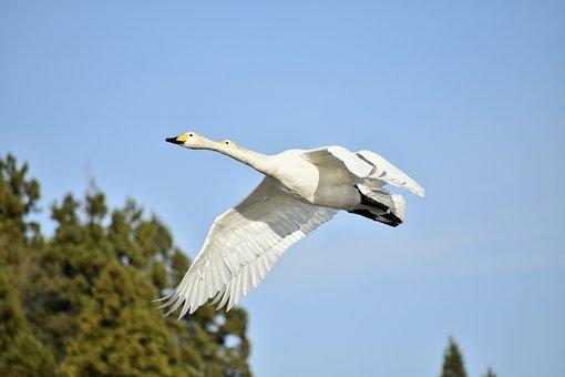 Animal, Sky, Forest, Bird, Wild Birds, Waterfowl