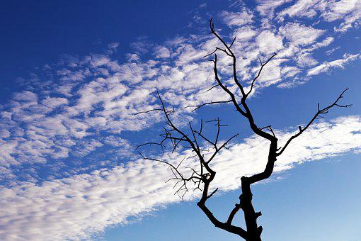 Tree, Branches, Silhouette, Sky, Clouds, Nature, Blue