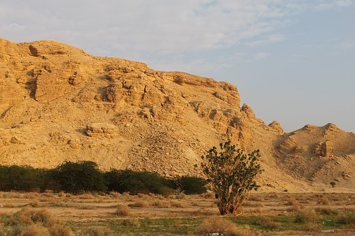 Saudi Arabian Desert, Desert, Desert Plants