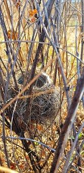 Nature, Jack, Birds, Spring, Bird, Easter, Egg, Air