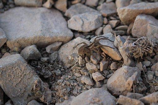 Spider, Stones, Grey, Nature, Floor, Stone, Texture