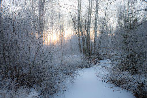 Winter, Snow, Frost, Forest, Cold, Ice, Nature, Frozen