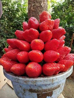 Strawberry, Fruit, Mahabaleshwar, India