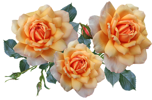 Roses, Flowers, Arrangement, Garden, Nature