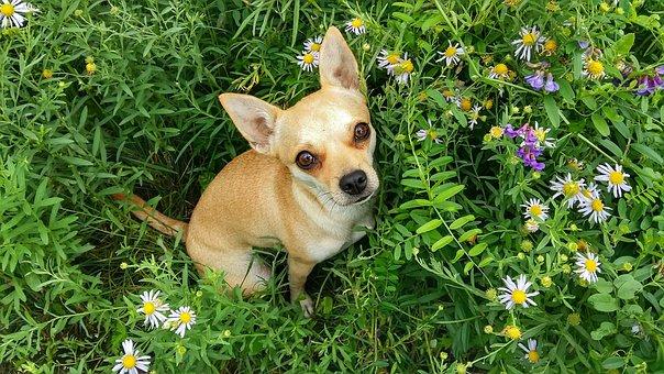 Dog, Grass, Summer, Meadow, Flowers, Puppy, Cute