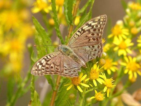 Butterfly, Yellow Flower, Libar, Detail