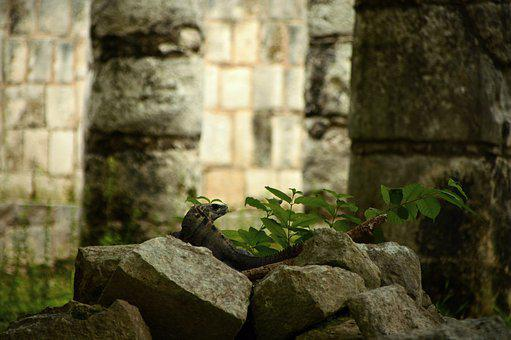 Lizard, Pyramids, Maya, Mexico, Pyramid, Architecture