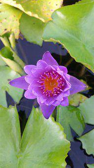 Lotus, Wood Decor, Home And Garden, The Pink Flowers