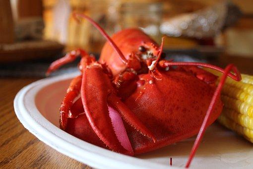 Lobster, Food, Seafood, Maine, New England, Corn