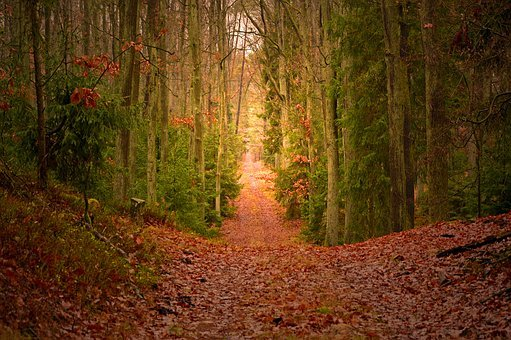 Forest, Mixed Forest, Trees, Nature, Autumn, Landscape