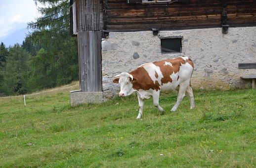 Alm, Alpine Hut, Nature, Landscape, Hut, Alpine